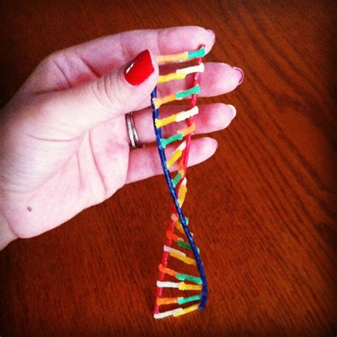dna model using pipe cleaners and 17 best images about dna models on homeschool