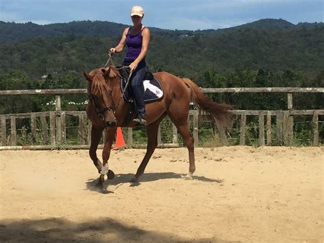 rhythm for horses quot rhythm quot thoroughbred mare chestnut horses for sale