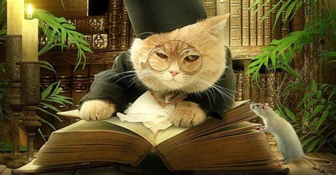 cat picture book the minister s cat is a dapper cat wrotetrips