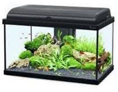 aquarium de 60 litres quels poissons et combien