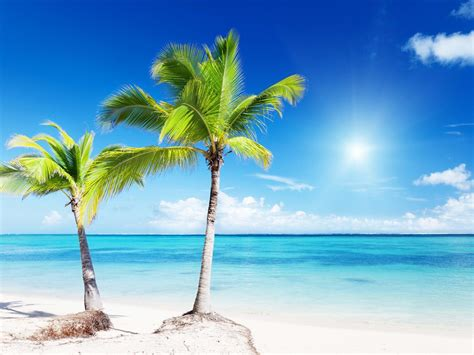 tropical tree tropical beaches with palm trees wallpaper