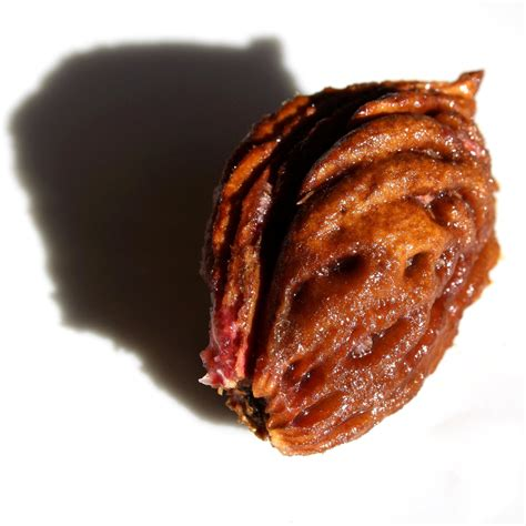Free picture: peach pit, seed, kernel