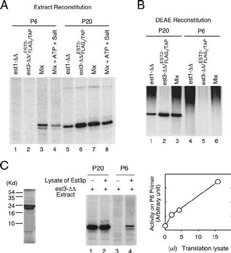 igg sepharose reconstitution of telomerase activity from mutant