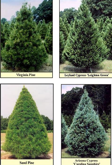 type of trees type tree lizardmedia co
