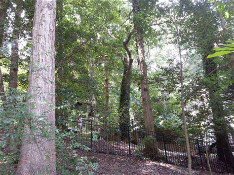 cherry bbq cooking wood forest raleigh tree service tree cutting removal