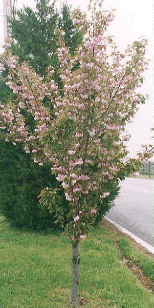 777 cherry tree rd cherry
