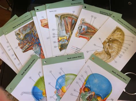 netter s anatomy flash cards with student consult access 4e netter basic science netter s anatomy flash cards with student