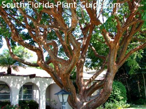 10 weird and wild native florida keys plants tequesta