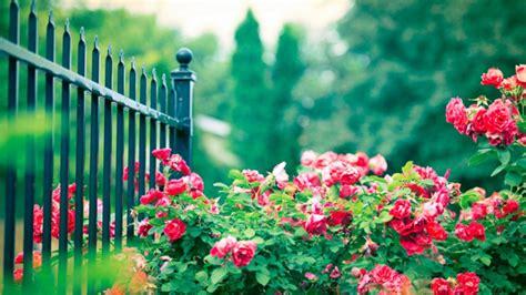 Beautiful Rose Garden Wallpaper Muksstcz   decorating clear