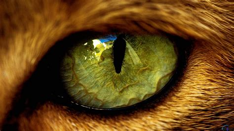 cat eye cat eye beautiful wallpaper cats picture