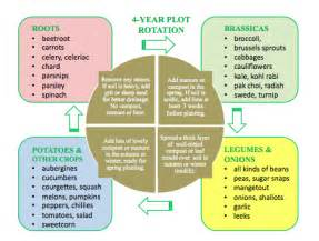 crop rotation home vegetable garden crop rotation give it a go http www woollygreen