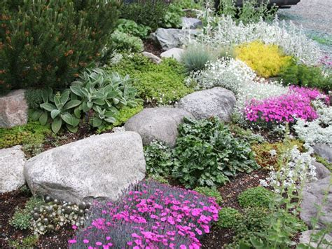 rocks for the garden perennials for rock gardens plants gardens