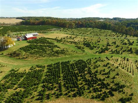 tree farm in maryland baltimore tree farm cut your own trees montgomery md