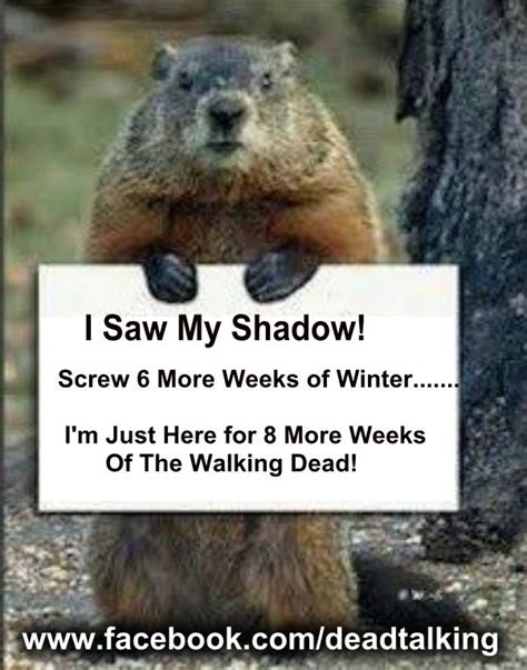 groundhog day used to something 72 best images about groundhogs day on