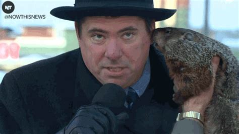 groundhog day ned ryerson gif groundhog day gifs primo gif animated gifs