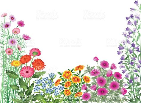 garden flower borders garden flowers border stock vector 165721516 istock