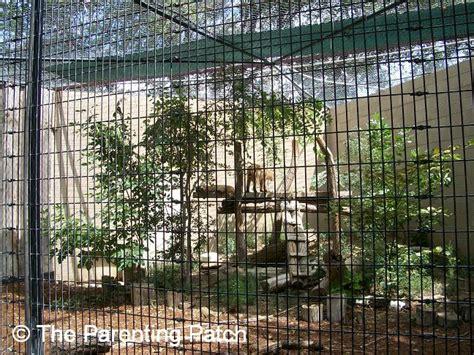 Garden City Zoo Big Cats At The Richardson Zoo In Garden City Kansas