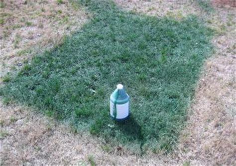spray painting grass green spray green grass paint turf dye turns brown dormant lawn