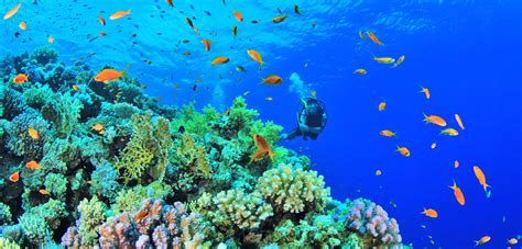 in philippines diving in anilao batangas of the philippines a