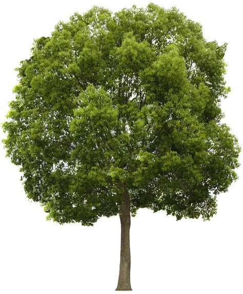 tree preservatives arbre png feuilles paysage biblioth 232 que psd