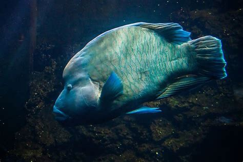 best 20 nausicaa aquarium ideas on boulogne sur mer aquarium d eau sal 233 e