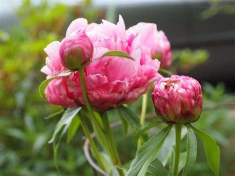 flower gardening 101 cut flower gardening 101 how to flowers tip junkie
