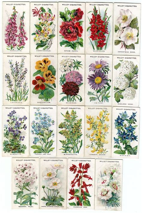 list of garden flowers with pictures names and illustrations of traditional cottage