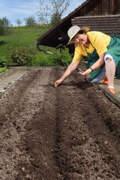 preparing vegetable garden soil 1000 images about growing vegetables on how