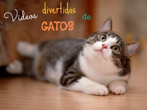 videos cortos graciosos v 237 deos graciosos de gatos todo mascotas