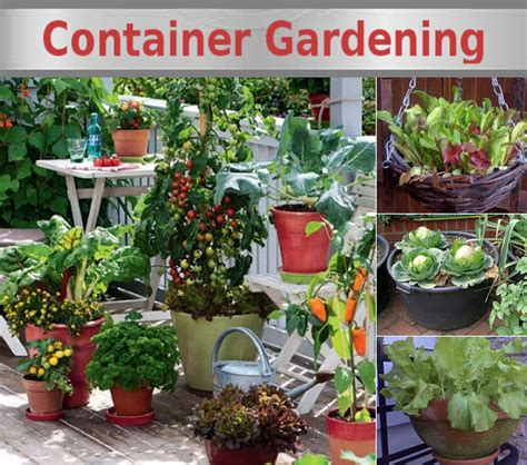vegetable gardening in pots growing vegetables in containers