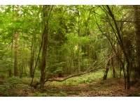 chaulk woodworking woodlands co uk woodlands for sale in northern