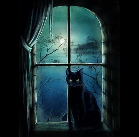 witches cat witches cat cats animals background wallpapers on
