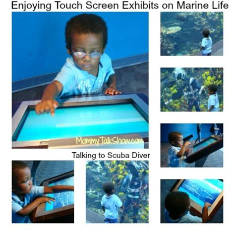 review for toddlers at the aquarium talk show