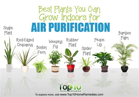 the best indoor plants 10 best plants you can grow indoors for air purification