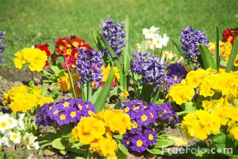 images of flowers in the garden flowers in a garden border pictures free use image 12 13