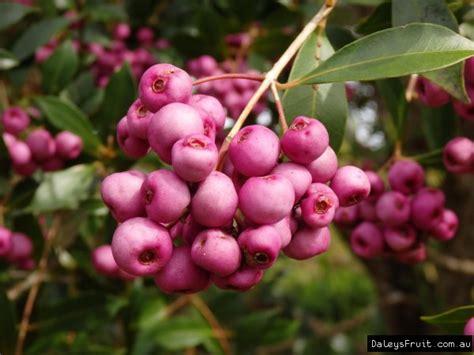 cherry tree zone 9b unbioln3qrs