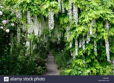 flower tunnel 100 wisteria flower tunnel japan wisteria flower