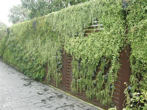 hanging wall garden hanging gardens and green walls in thailand thai garden