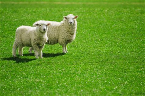 Animal Nursery Pictures by Farm Animals Uberkiddo