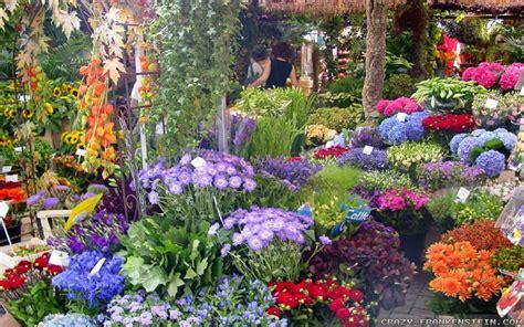 beautiful flower garden wallpaper beautiful flower garden flower