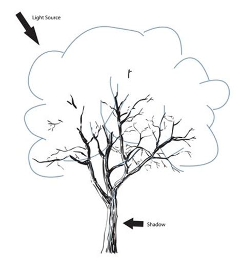 how to draw a realistic tree step by step 54 best images about how to draw realistic trees plants