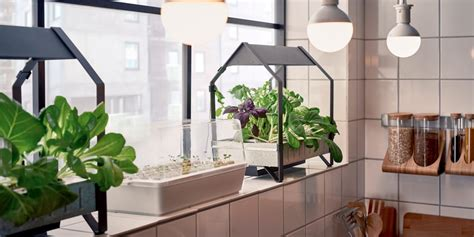 hydroponic vegetable garden kit ikea released a hydroponic gardening collection business