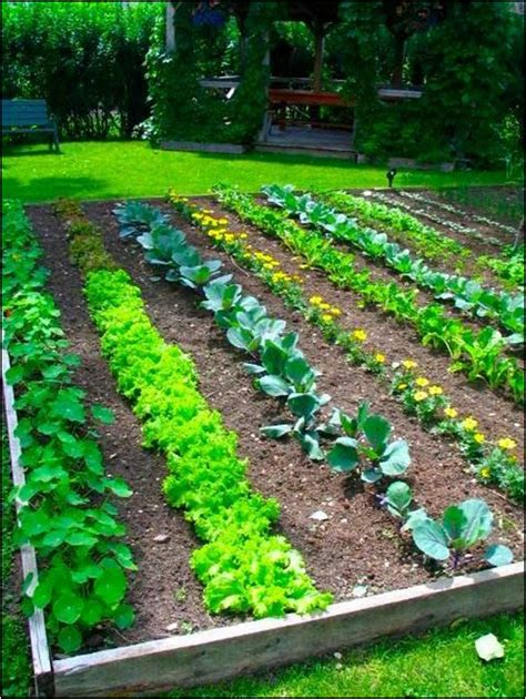 vegetables for home garden all about vegetable garden layout front yard landscaping