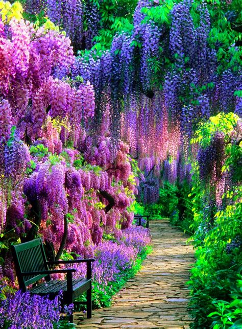 flower tunnel the wisteria tunnel at kawachi fuji garden in japan is the
