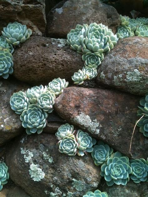rock wall garden ideas 25 best ideas about succulent rock garden on