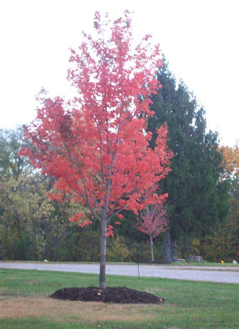 replacement tree light bulbs homebase tree replacement 28 images crete replacement trees set