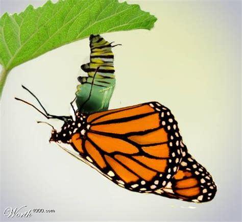 kupu kupu butterfly