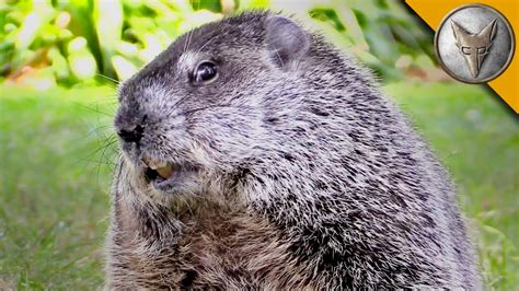 groundhog day keep the talent happy happy groundhog day meet the future of groundhog s