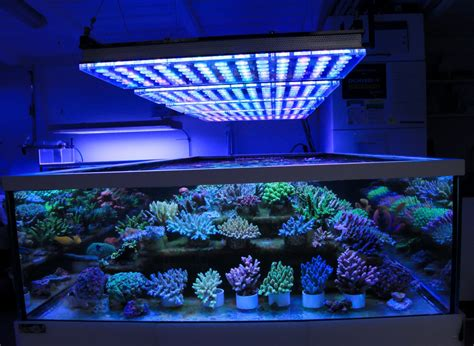 aquarium led lights german store displays beautiful coral atlantik v4 led