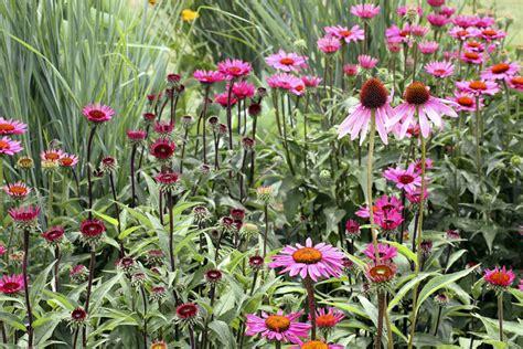 garden flowers perennials blooming perennial flowers